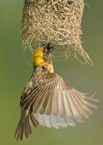 This image has an empty alt attribute; its file name is Burung-nest-04.jpg